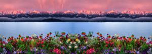 Blumen03b-Galerie-7370 4-