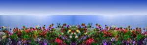 Blumen03d-7370 4-Art