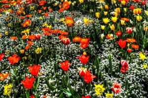 Blumen05-7617 7621TT1-Galerie