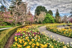 Blumen9-7655 8