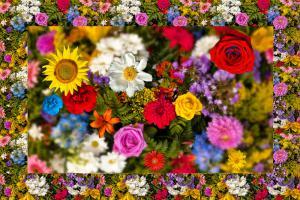 Blumen002-Flowers-SerieB1-Excellent